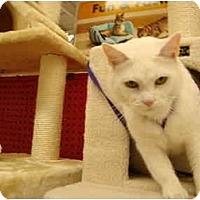 Adopt A Pet :: Petco-Emma - Owasso, OK