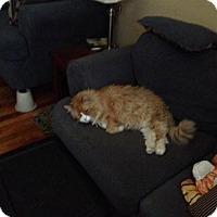 Adopt A Pet :: Foxy - Pittstown, NJ