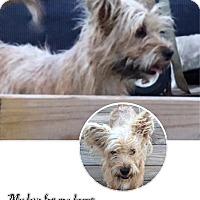 Adopt A Pet :: Reba - San Antonio, TX