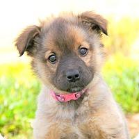 Adopt A Pet :: Noelle von Wuste - Thousand Oaks, CA