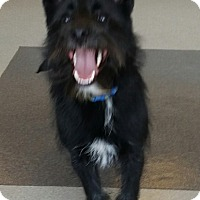 Adopt A Pet :: Shadow, absolutely Gorgeous - Corona, CA