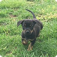 Adopt A Pet :: Jerry - Russellville, KY