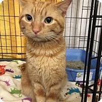 Adopt A Pet :: Benny - LaGrange Park, IL