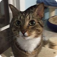 Adopt A Pet :: Ashton - Richmond, VA