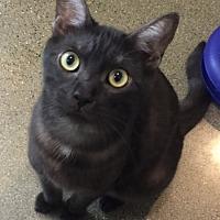 Adopt A Pet :: Winnie - El Dorado Hills, CA
