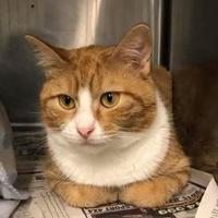 Adopt A Pet :: Tina - BATH, NY