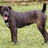 Adopt A Pet :: Bridget - Maynardville, TN