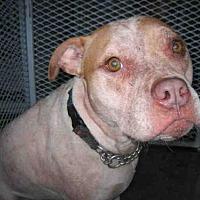 Adopt A Pet :: NATASHA - ID#A297370 - Petaluma, CA
