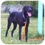 Photo 2 - Labrador Retriever Mix Dog for adoption in Austin, Minnesota - Claude
