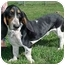 Photo 3 - Basset Hound Mix Dog for adoption in North Judson, Indiana - Jonah