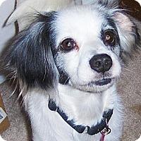 Adopt A Pet :: Patches - Jacksonville, FL