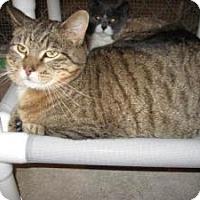 Adopt A Pet :: Portia - Geneseo, IL