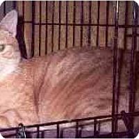 Adopt A Pet :: Nimba - Clementon, NJ