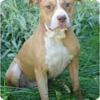 Adopt A Pet :: Loki - Chicago, IL