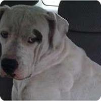Adopt A Pet :: Super Duper - miami beach, FL