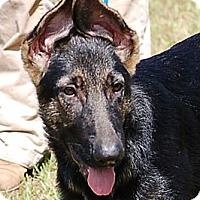 Adopt A Pet :: Jake#4 AD 08-30-14 - Preston, CT