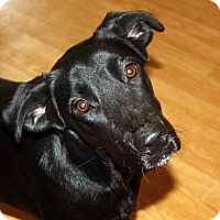 Adopt A Pet :: Lexi - in Maine - kennebunkport, ME