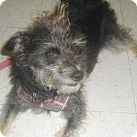 Adopt A Pet :: Quinn - Lockhart, TX
