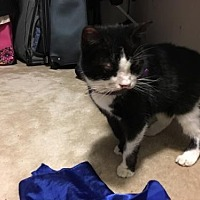Adopt A Pet :: Lila - Herndon, VA