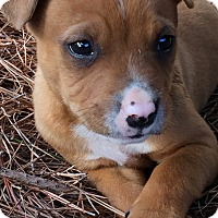 Adopt A Pet :: Nizzle - Greensboro, GA
