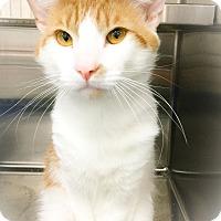Adopt A Pet :: Ecuador - Webster, MA