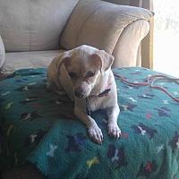 Adopt A Pet :: Nana - Rising Sun, MD