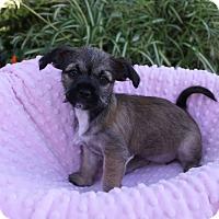 Adopt A Pet :: TULIP - Newport Beach, CA