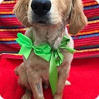 Adopt A Pet :: Prince (in adoption process) - El Cajon, CA