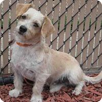 Adopt A Pet :: *LUCKY - Norco, CA