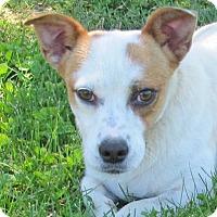 Adopt A Pet :: Gloria - Woodstock, IL