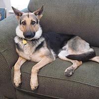 Adopt A Pet :: Kari - Sealy, TX