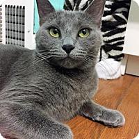 Adopt A Pet :: Jewels - Newtown Square, PA