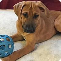 Adopt A Pet :: 'JUMBI' - Agoura Hills, CA
