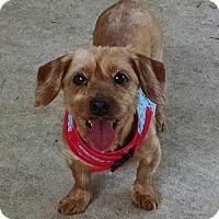 Adopt A Pet :: Ben Franklin - San Antonio, TX