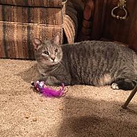 Adopt A Pet :: Barney/Courtesy Post - cedar grove, IN