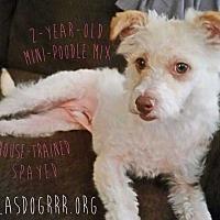 Adopt A Pet :: Gigi - Allen, TX