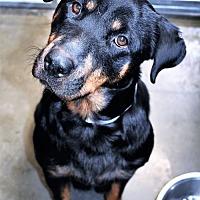 Adopt A Pet :: Kendall - San Jacinto, CA