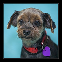 Adopt A Pet :: Apple - San Diego, CA