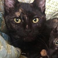 Adopt A Pet :: Kirby - Hammond, LA