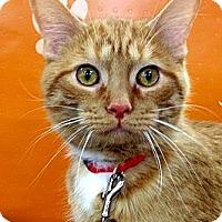 Adopt A Pet :: Nugget - Green Bay, WI