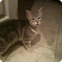 Adopt A Pet :: Kitty - Justin, TX
