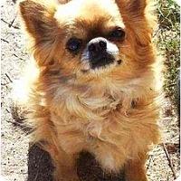 Adopt A Pet :: Pudgie - Gilbert, AZ