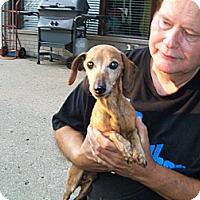 Adopt A Pet :: Ricky - West Bloomfield, MI