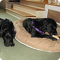 Adopt A Pet :: Dolly and Molly - New Canaan, CT