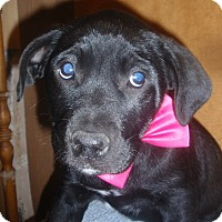 Adopt A Pet :: Cathi - Gregory, SD