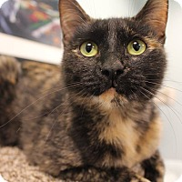 Adopt A Pet :: Chrissy - Byron Center, MI