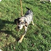 Adopt A Pet :: Murphy - Ocala, FL