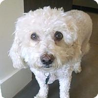 Adopt A Pet :: Digger - East Hanover, NJ