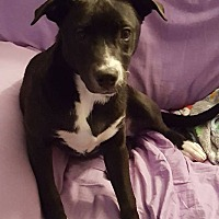 Adopt A Pet :: Everest - Youngstown, OH