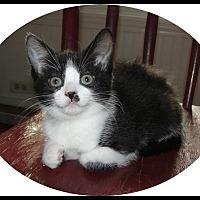 Adopt A Pet :: Pearle - Mt. Prospect, IL